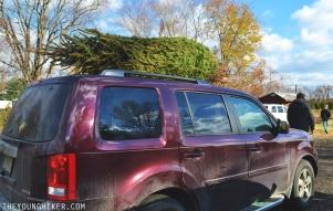 christmas-tree-new-jersey